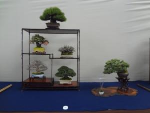 (公社)全日本小品盆栽協会賞