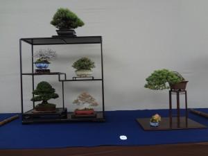 (公社)全日本小品盆栽協会名誉会長賞