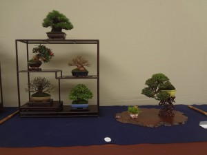 日本小品盆栽組合賞