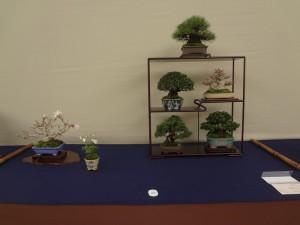 日本小品盆栽組合理事長賞