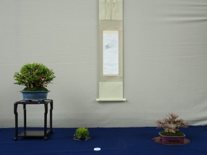 日本盆栽協同組合賞